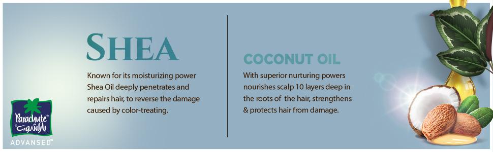 Shea & Coconut Oil